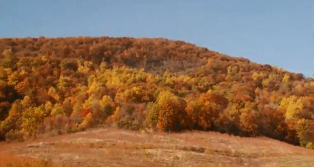 Autumn Trees Customer Journey