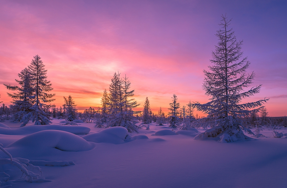 Winter landscape with forest, clouds and sun