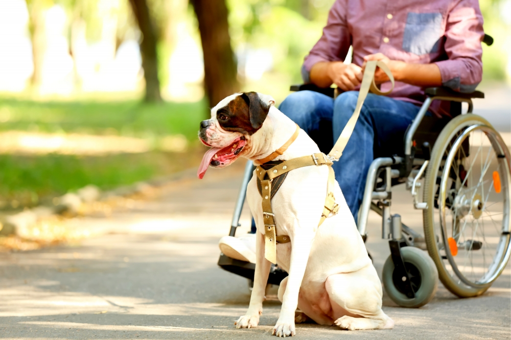 dog next to wheelchair